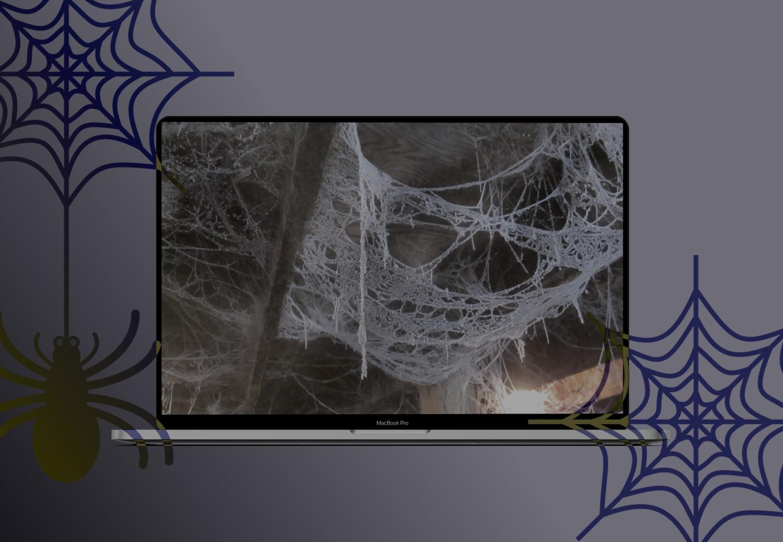 Паучья сеть